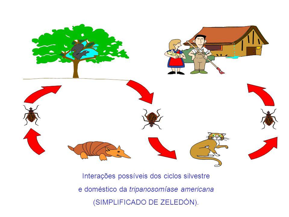 Interações possíveis dos ciclos silvestre