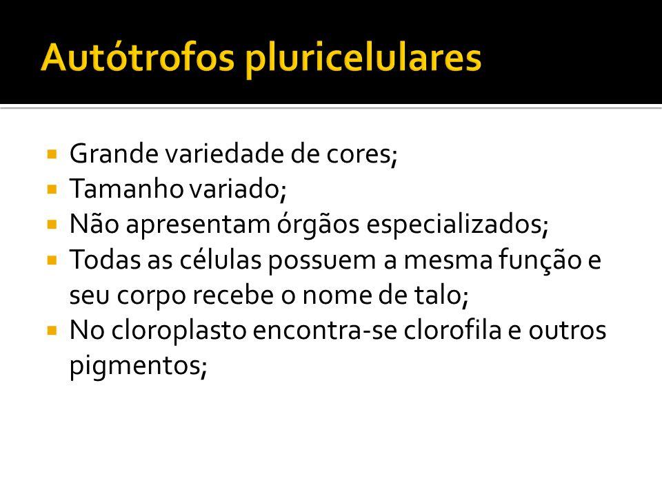 Autótrofos pluricelulares