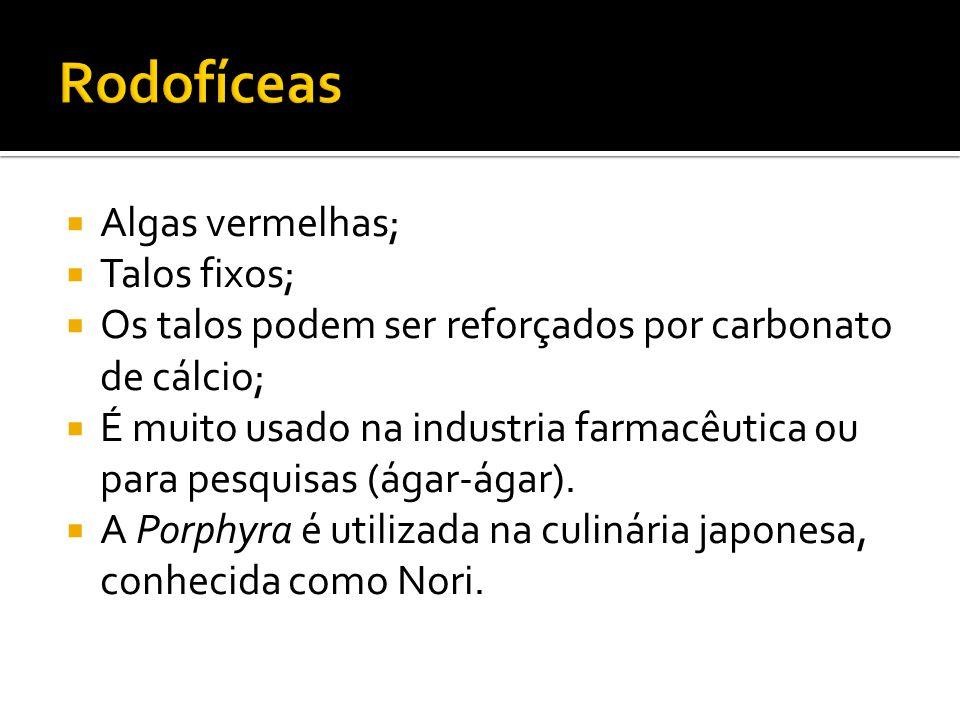 Rodofíceas Algas vermelhas; Talos fixos;