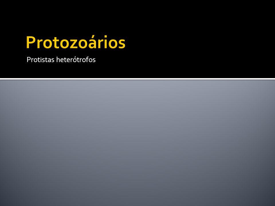 Protozoários Protistas heterótrofos