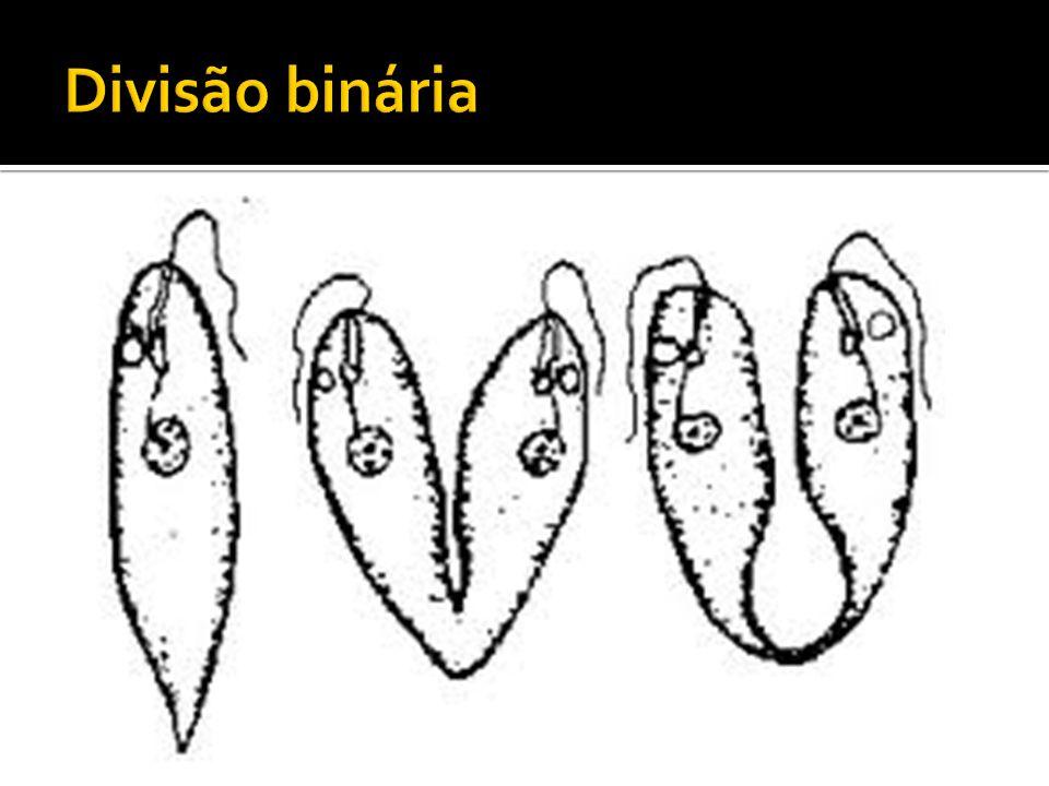 Divisão binária