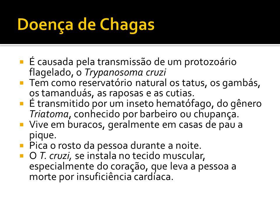 Doença de Chagas É causada pela transmissão de um protozoário flagelado, o Trypanosoma cruzi.