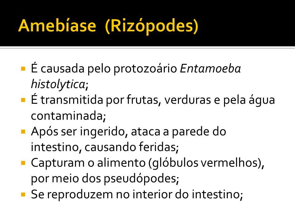 Amebíase (Rizópodes) É causada pelo protozoário Entamoeba histolytica;