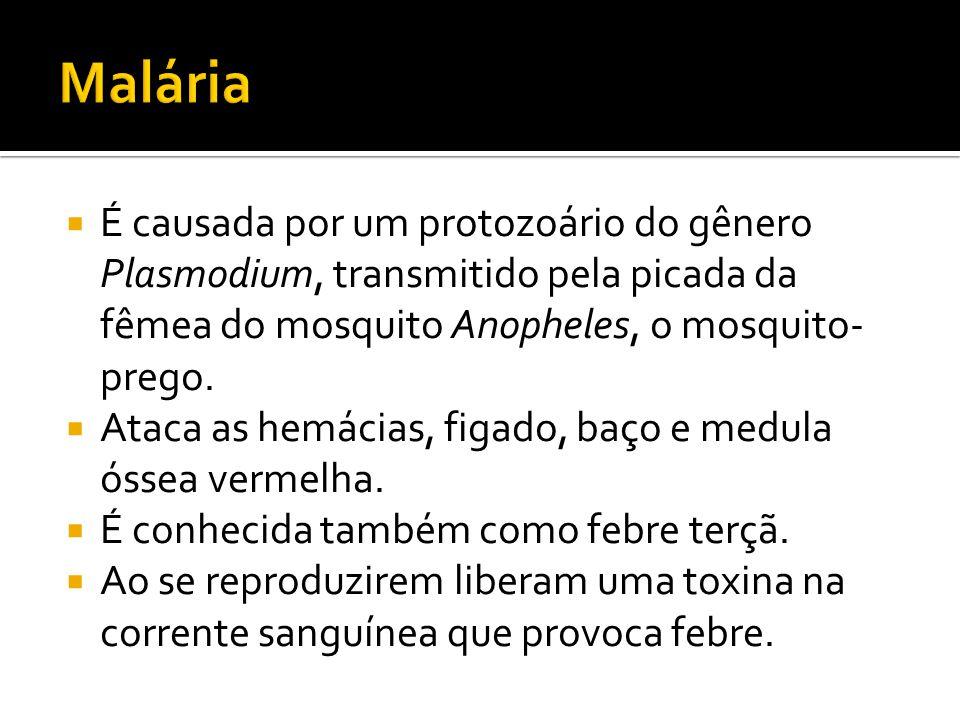 Malária É causada por um protozoário do gênero Plasmodium, transmitido pela picada da fêmea do mosquito Anopheles, o mosquito- prego.