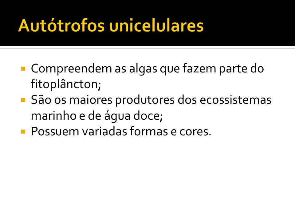 Autótrofos unicelulares