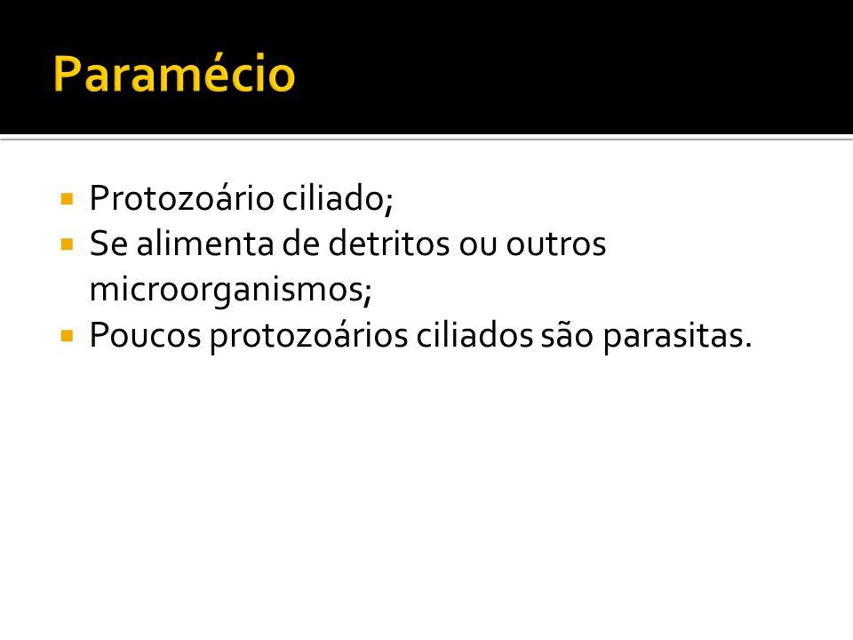 Paramécio Protozoário ciliado;