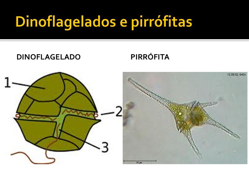 Dinoflagelados e pirrófitas