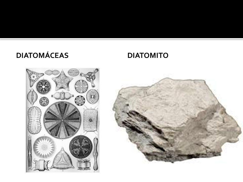 Diatomáceas diatomito