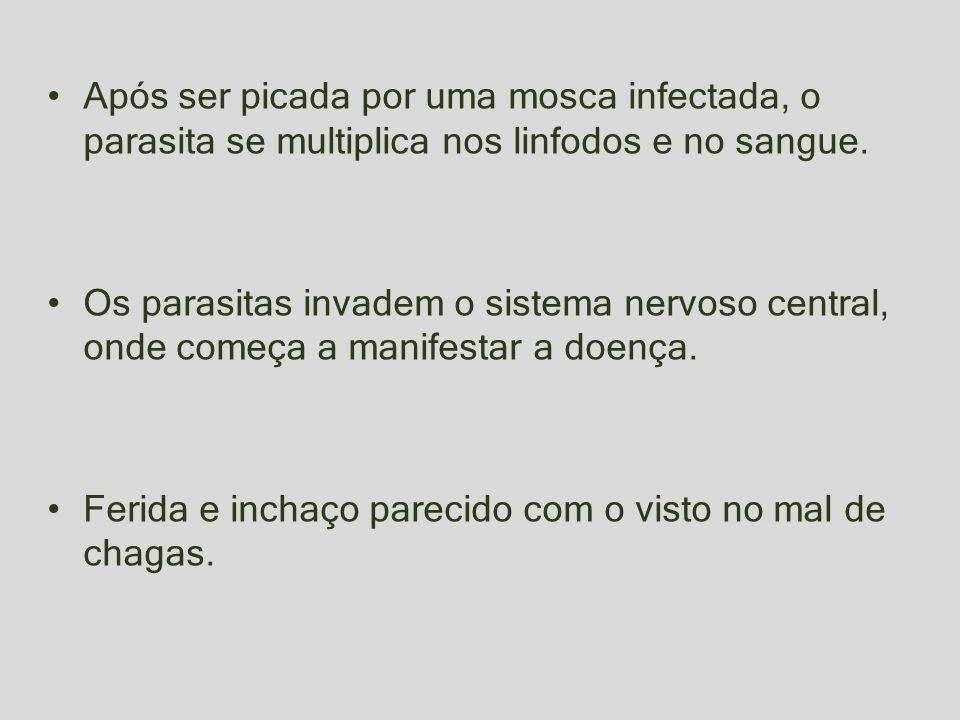Após ser picada por uma mosca infectada, o parasita se multiplica nos linfodos e no sangue.