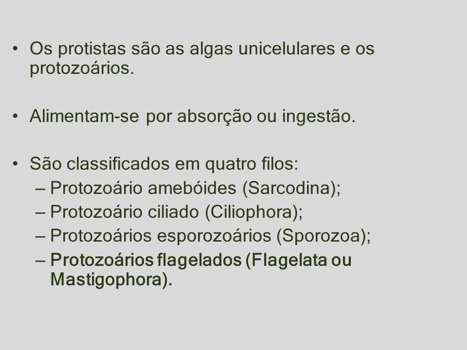 Os protistas são as algas unicelulares e os protozoários.