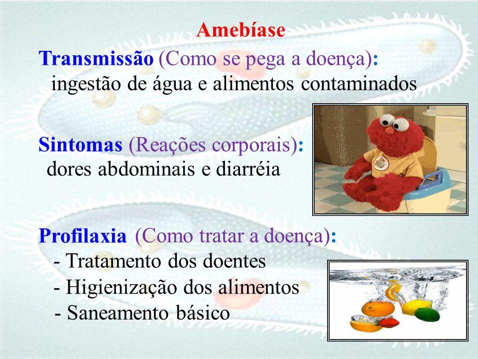 (Como se pega a doença): ingestão de água e alimentos contaminados
