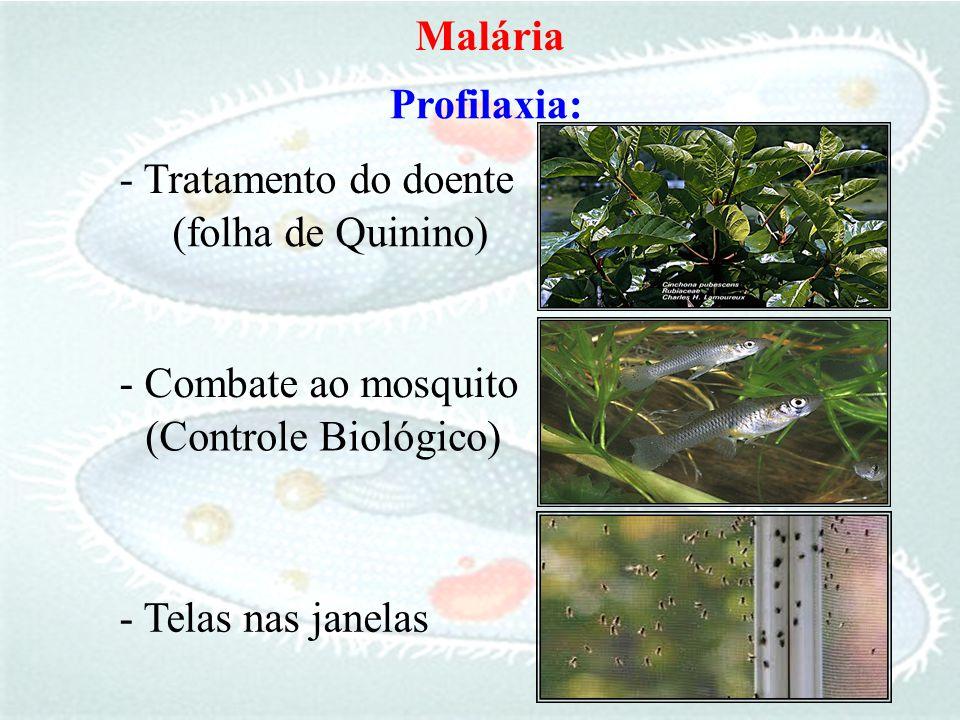 Malária Profilaxia: - Tratamento do doente. (folha de Quinino) - Combate ao mosquito. (Controle Biológico)