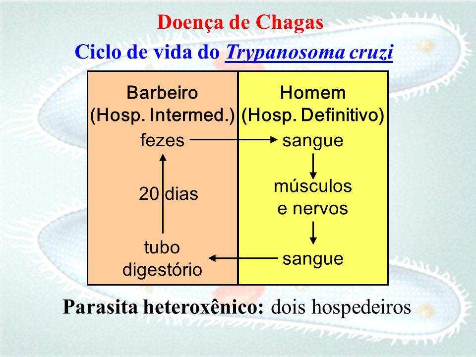 Ciclo de vida do Trypanosoma cruzi