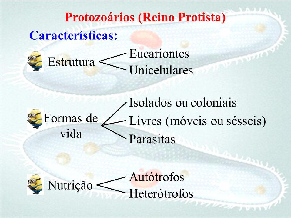 Protozoários (Reino Protista) Características: Eucariontes. Estrutura. Unicelulares. Isolados ou.