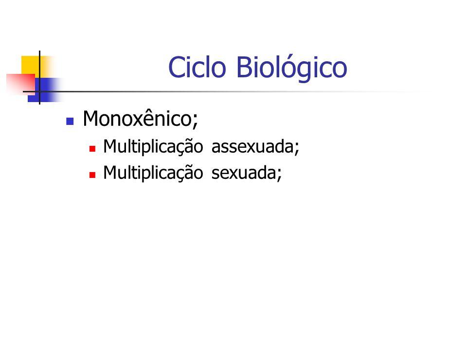 Ciclo Biológico Monoxênico; Multiplicação assexuada;