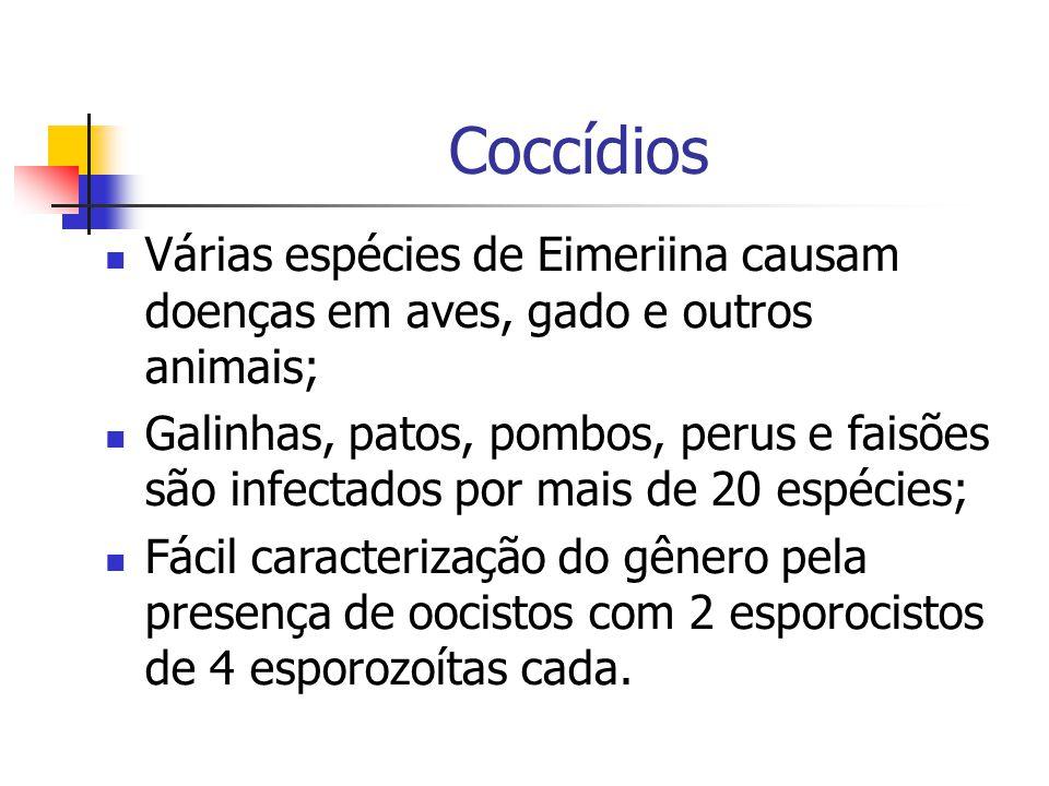 Coccídios Várias espécies de Eimeriina causam doenças em aves, gado e outros animais;
