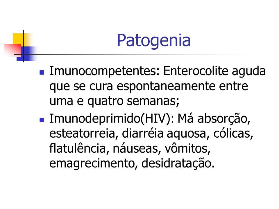 Patogenia Imunocompetentes: Enterocolite aguda que se cura espontaneamente entre uma e quatro semanas;