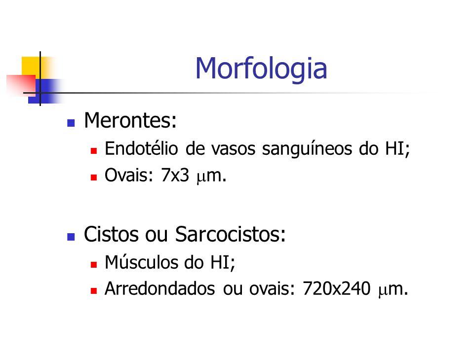 Morfologia Merontes: Cistos ou Sarcocistos: