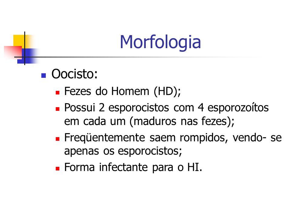 Morfologia Oocisto: Fezes do Homem (HD);