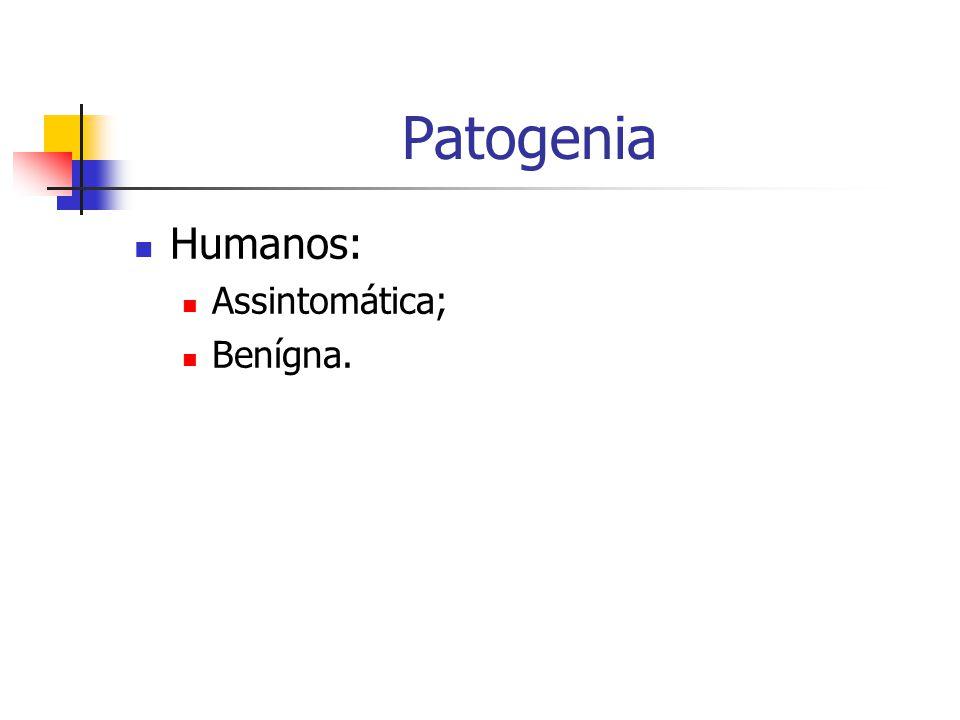 Patogenia Humanos: Assintomática; Benígna.