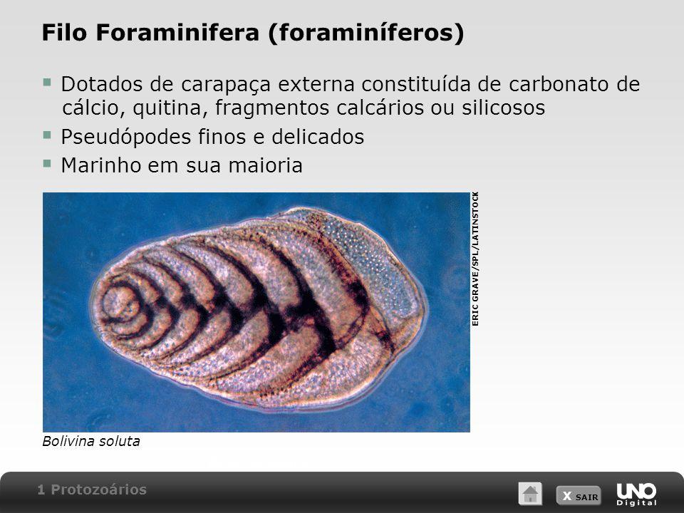Filo Foraminifera (foraminíferos)