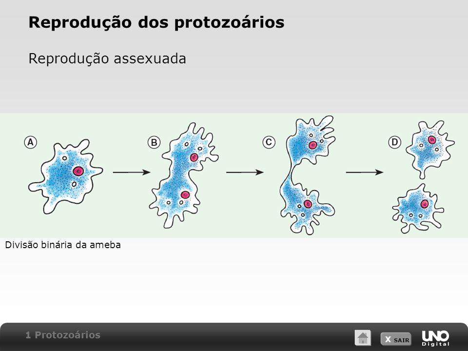 Reprodução dos protozoários
