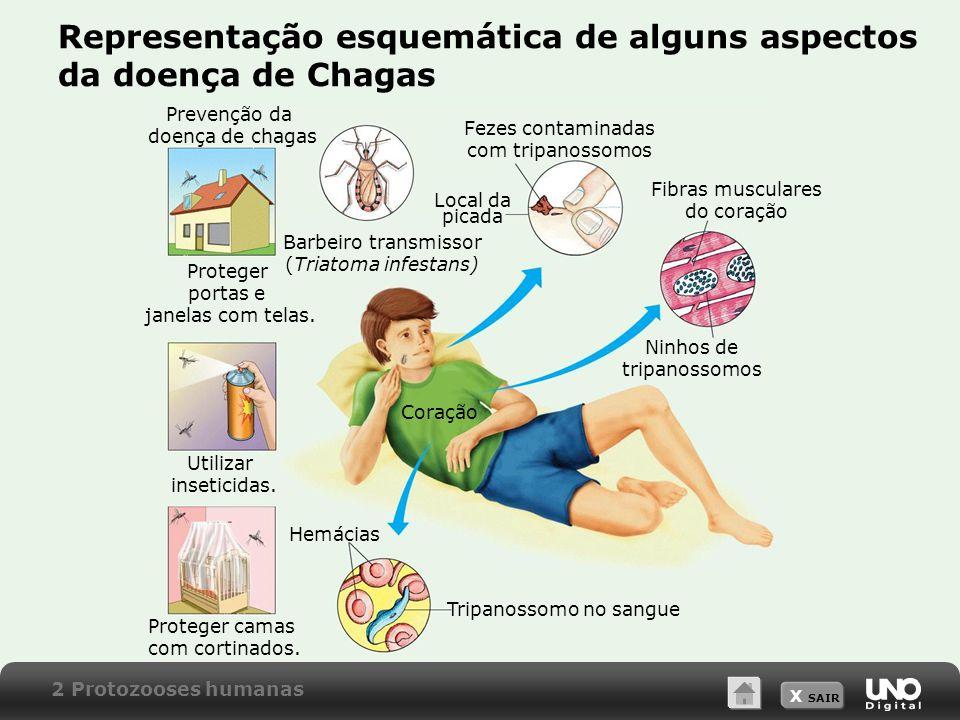 Representação esquemática de alguns aspectos da doença de Chagas