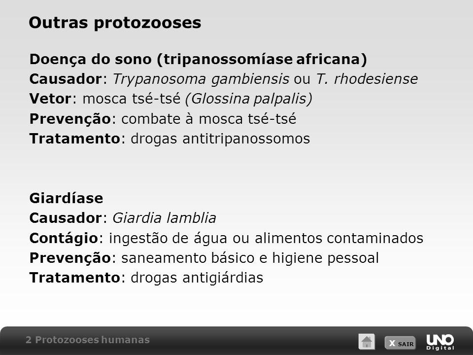 Outras protozooses Doença do sono (tripanossomíase africana)