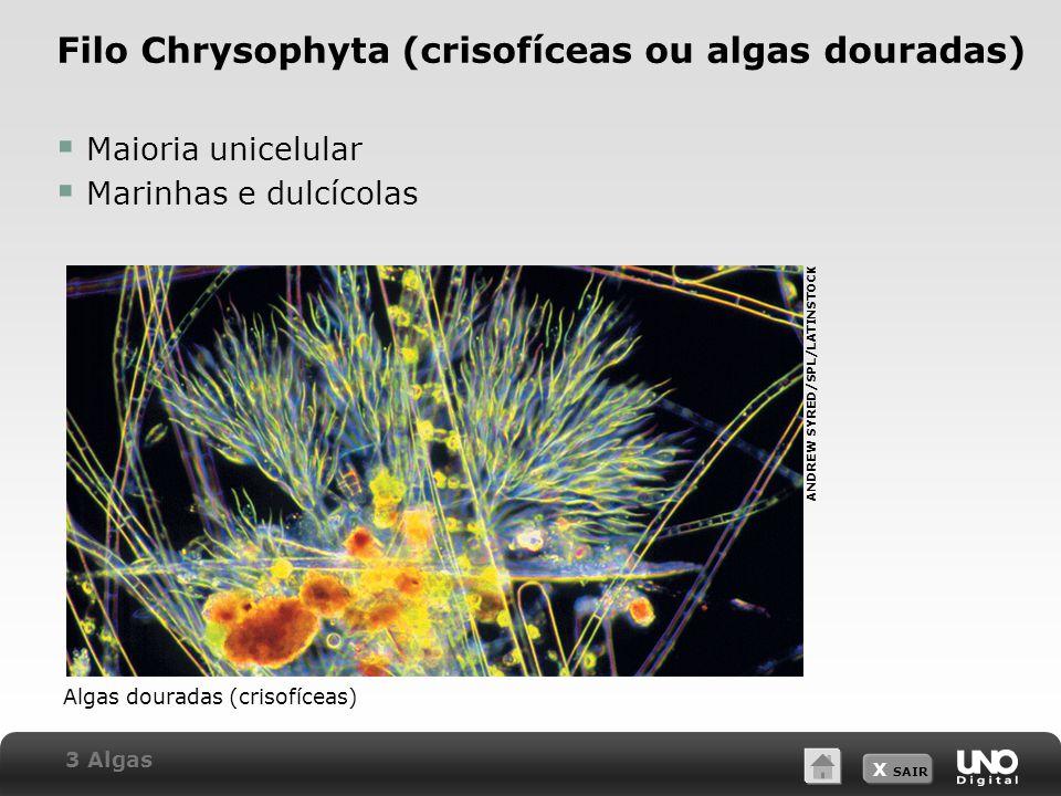 Filo Chrysophyta (crisofíceas ou algas douradas)