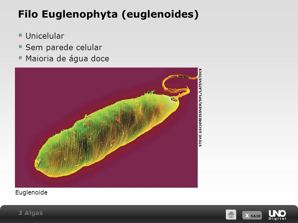 Filo Euglenophyta (euglenoides)