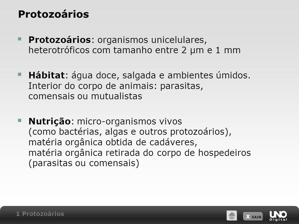 Protozoários Protozoários: organismos unicelulares, heterotróficos com tamanho entre 2 μm e 1 mm.