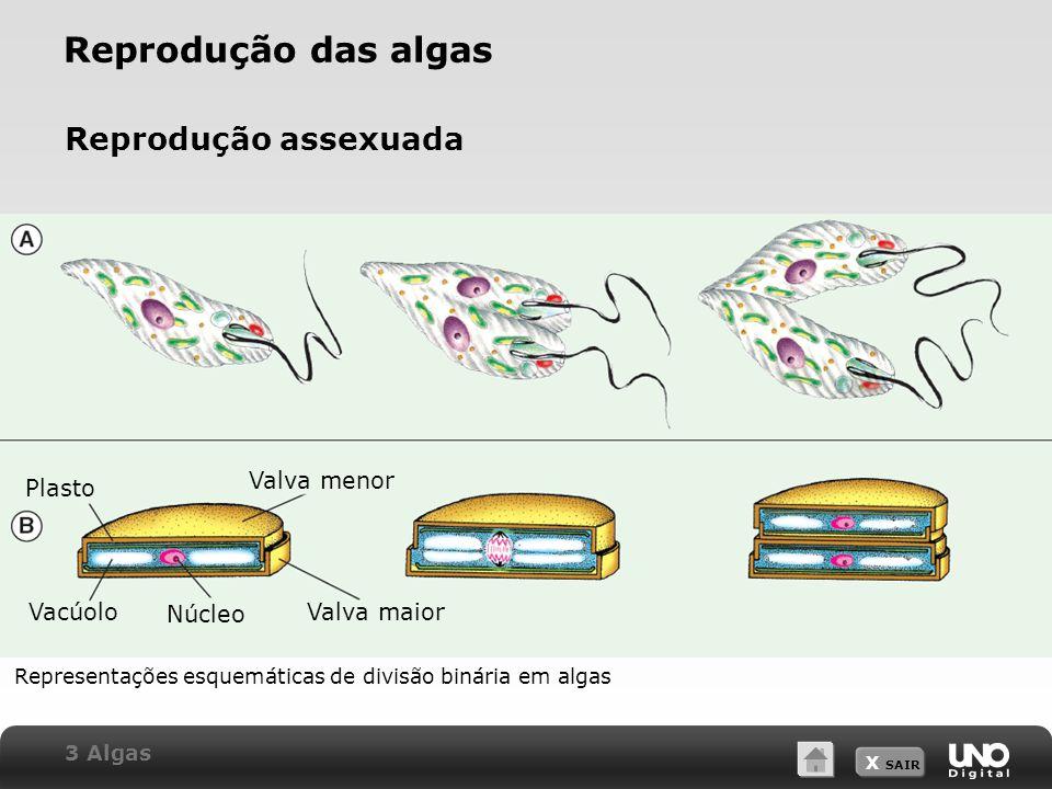 Reprodução das algas Reprodução assexuada Valva menor Plasto Vacúolo