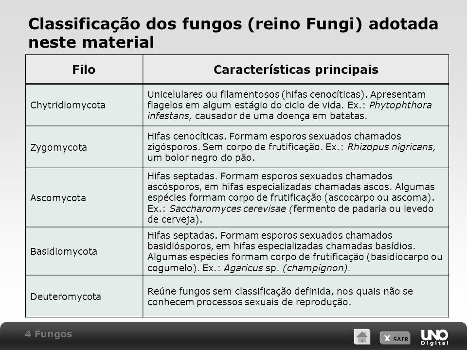 Classificação dos fungos (reino Fungi) adotada neste material