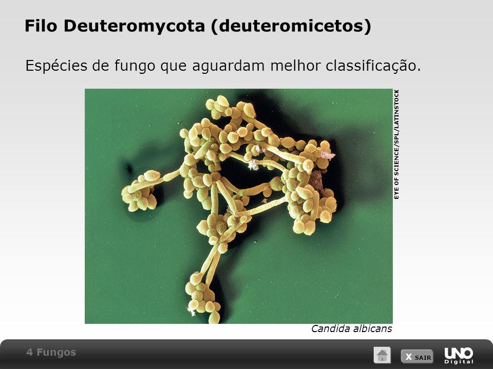 Filo Deuteromycota (deuteromicetos)