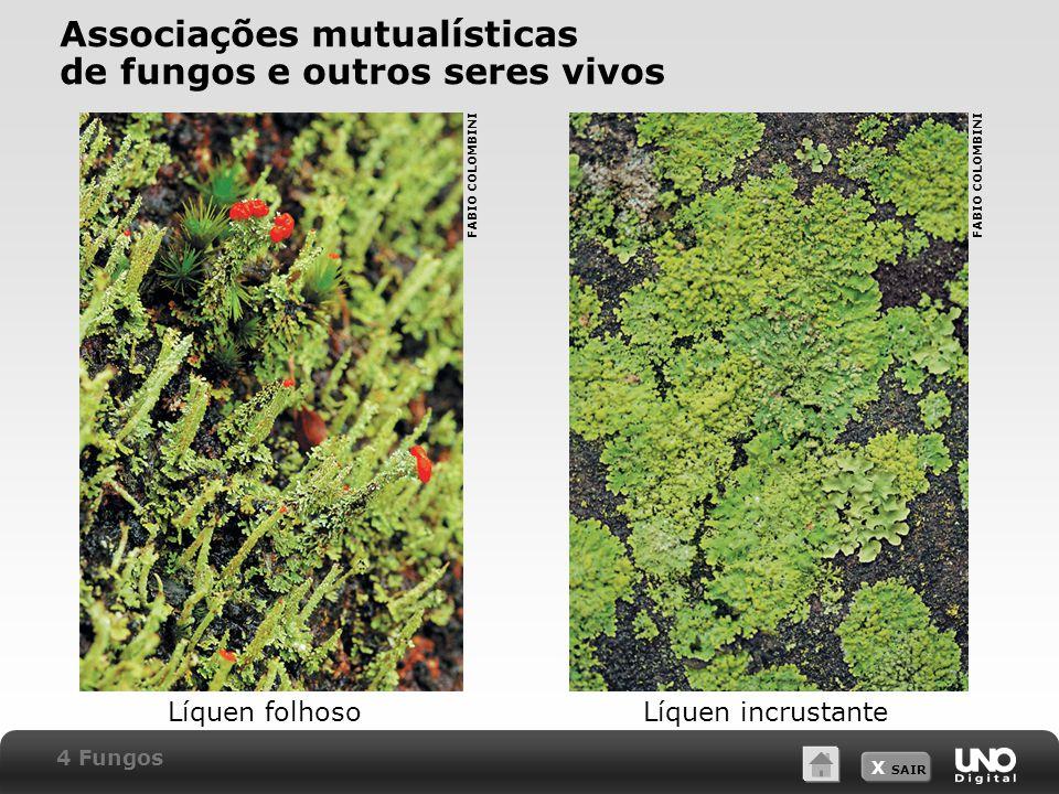 Associações mutualísticas de fungos e outros seres vivos