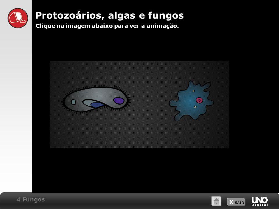 Protozoários, algas e fungos