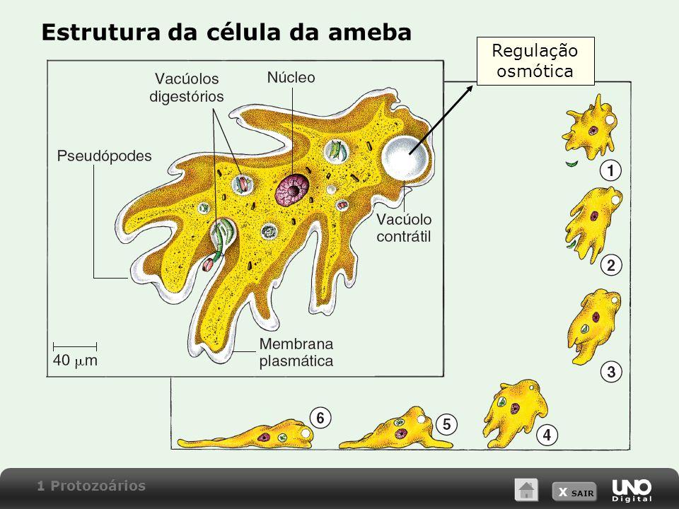 Estrutura da célula da ameba