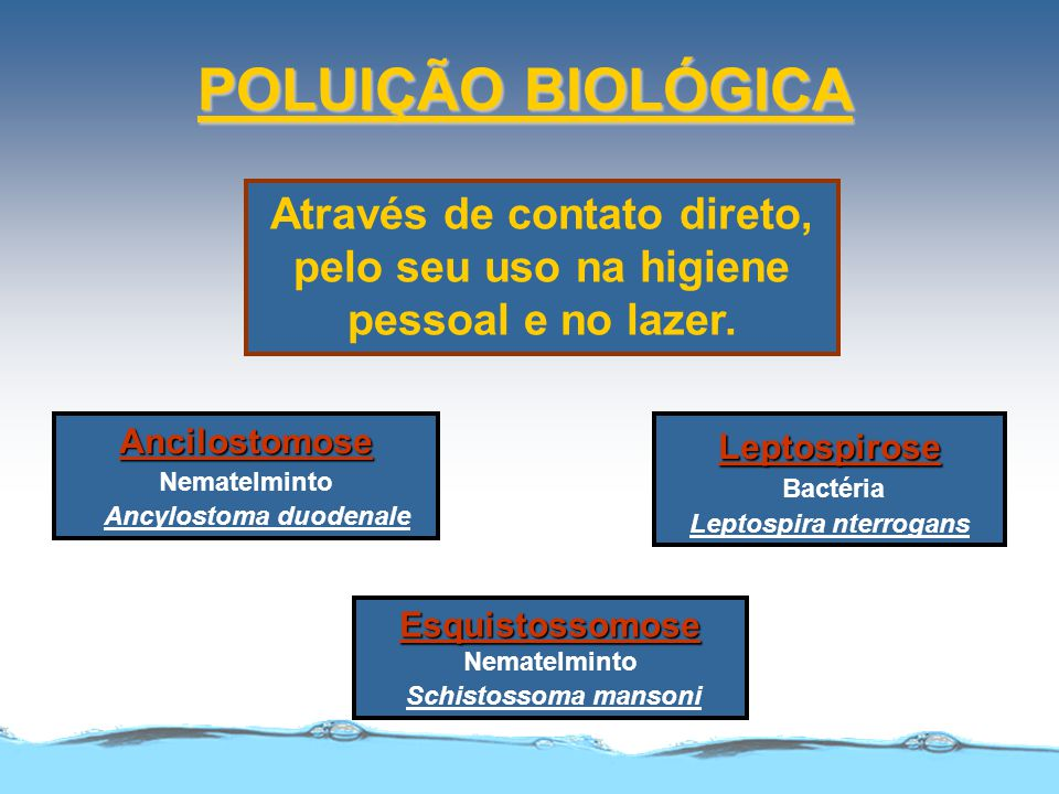 POLUIÇÃO BIOLÓGICA Por meio de insetos vetores que necessitam da água em seu ciclo biológico. Malária.