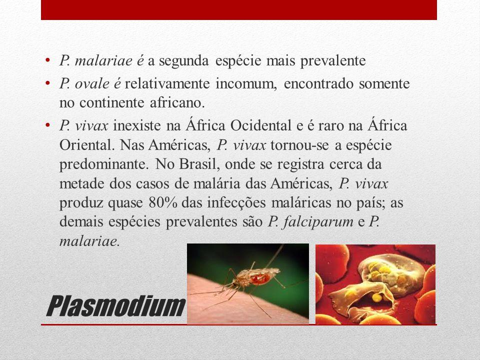 Plasmodium P. malariae é a segunda espécie mais prevalente