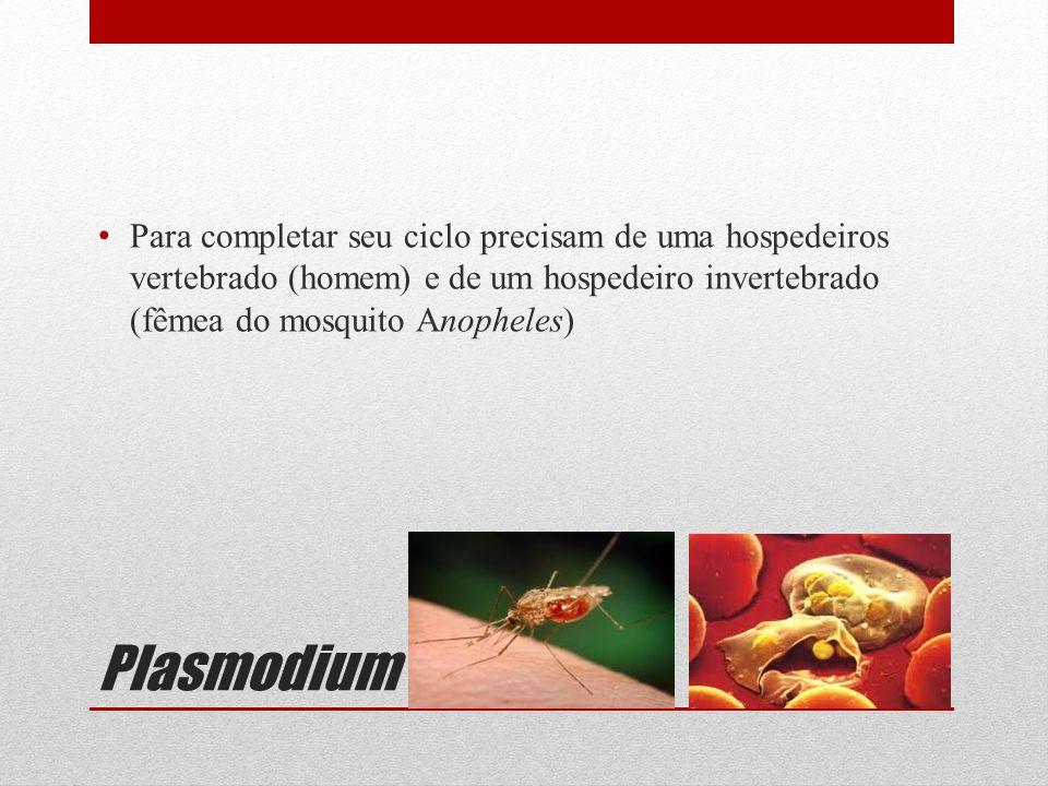 Para completar seu ciclo precisam de uma hospedeiros vertebrado (homem) e de um hospedeiro invertebrado (fêmea do mosquito Anopheles)