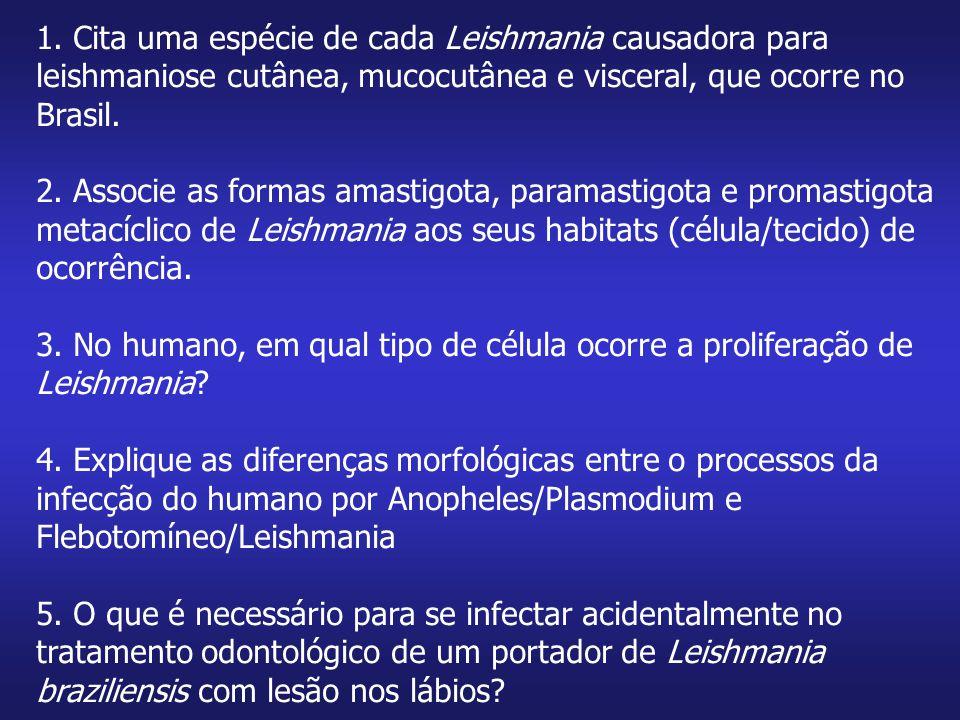 1. Cita uma espécie de cada Leishmania causadora para leishmaniose cutânea, mucocutânea e visceral, que ocorre no Brasil.