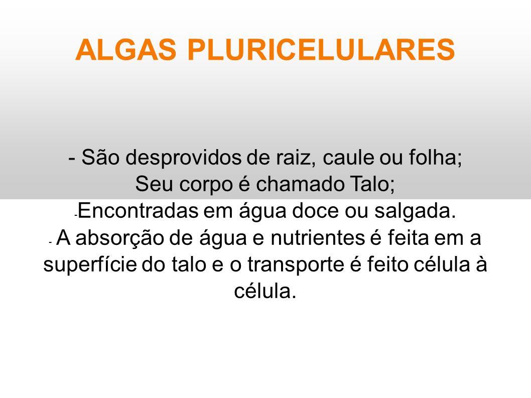 ALGAS PLURICELULARES - São desprovidos de raiz, caule ou folha;