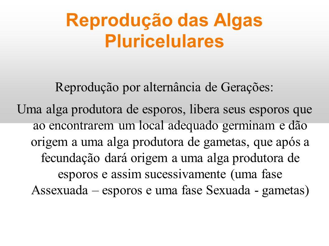 Reprodução das Algas Pluricelulares