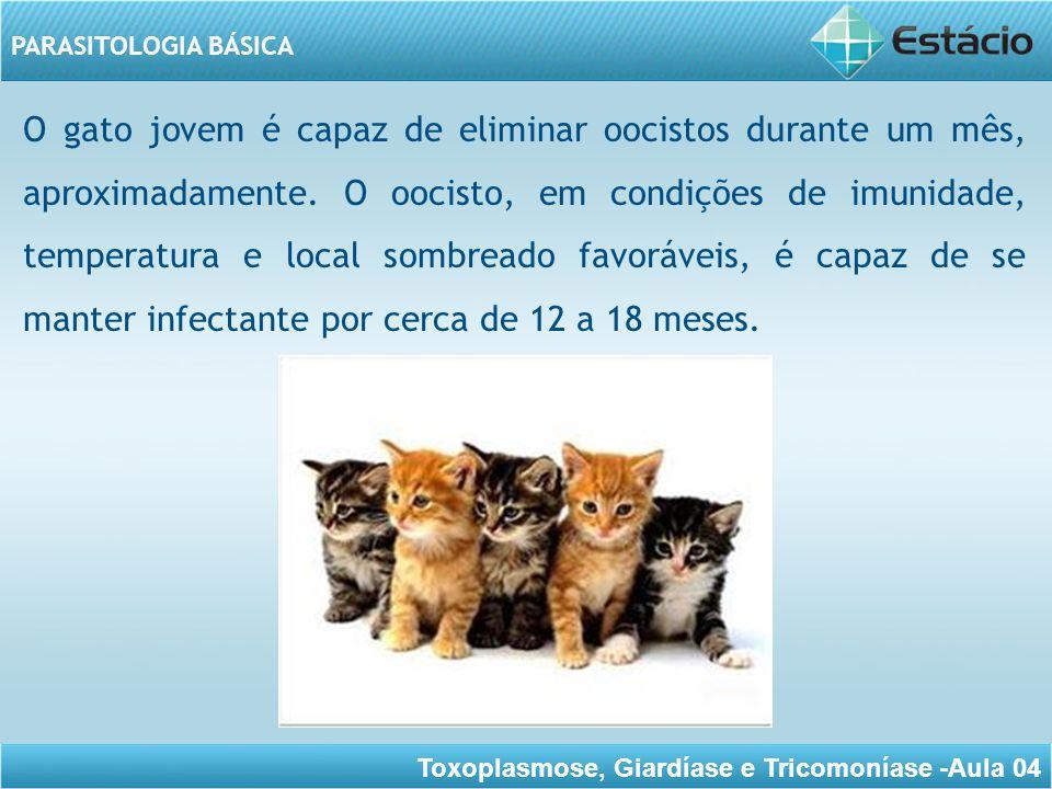 O gato jovem é capaz de eliminar oocistos durante um mês, aproximadamente.