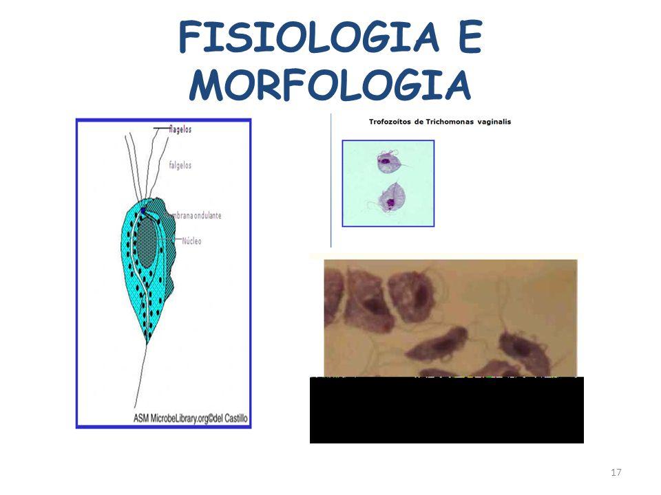 FISIOLOGIA E MORFOLOGIA