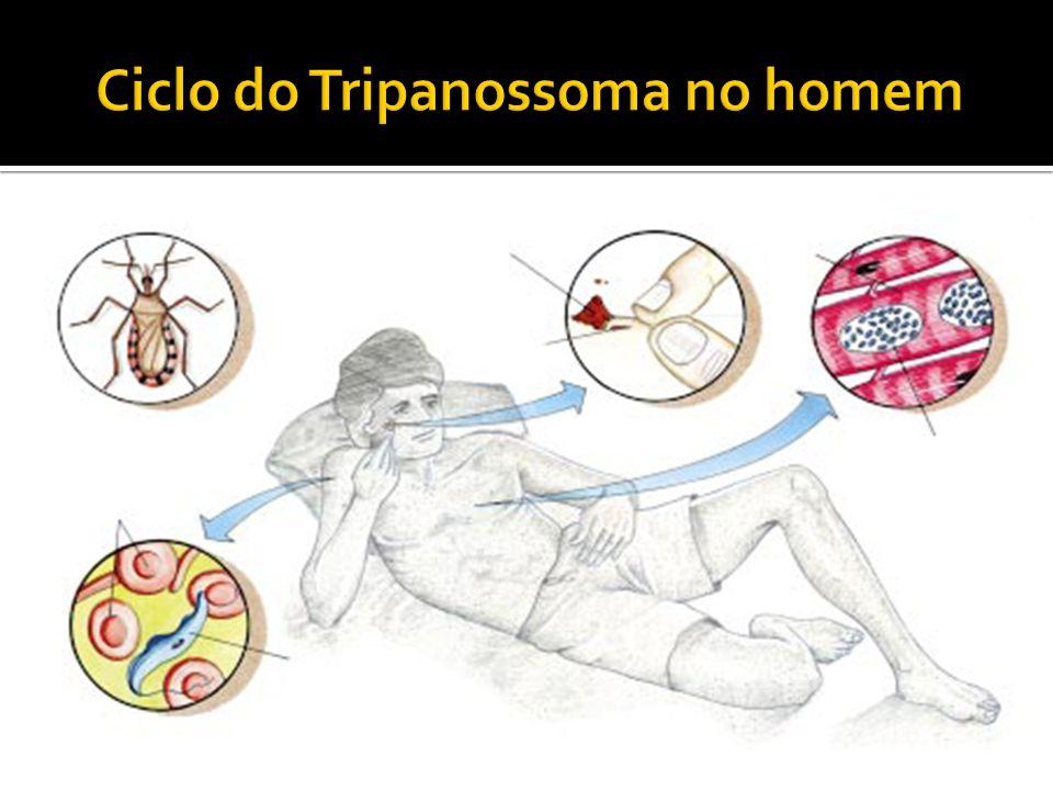 Ciclo do Tripanossoma no homem