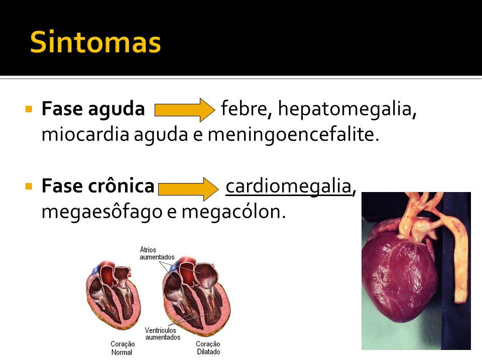 Sintomas Fase aguda febre, hepatomegalia, miocardia aguda e meningoencefalite.