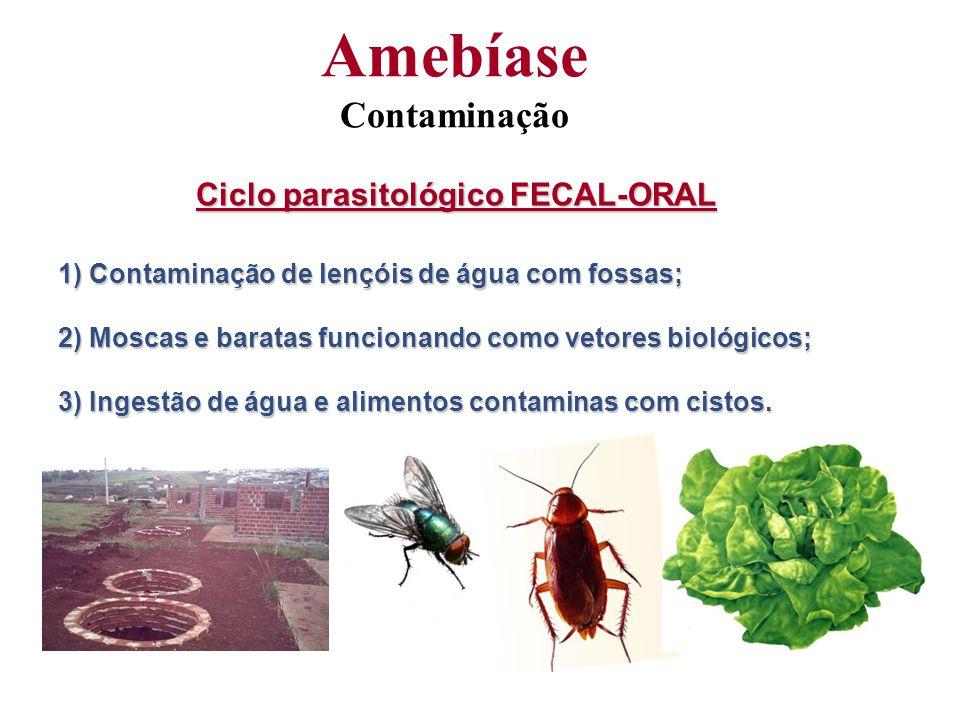 Amebíase Contaminação Ciclo parasitológico FECAL-ORAL