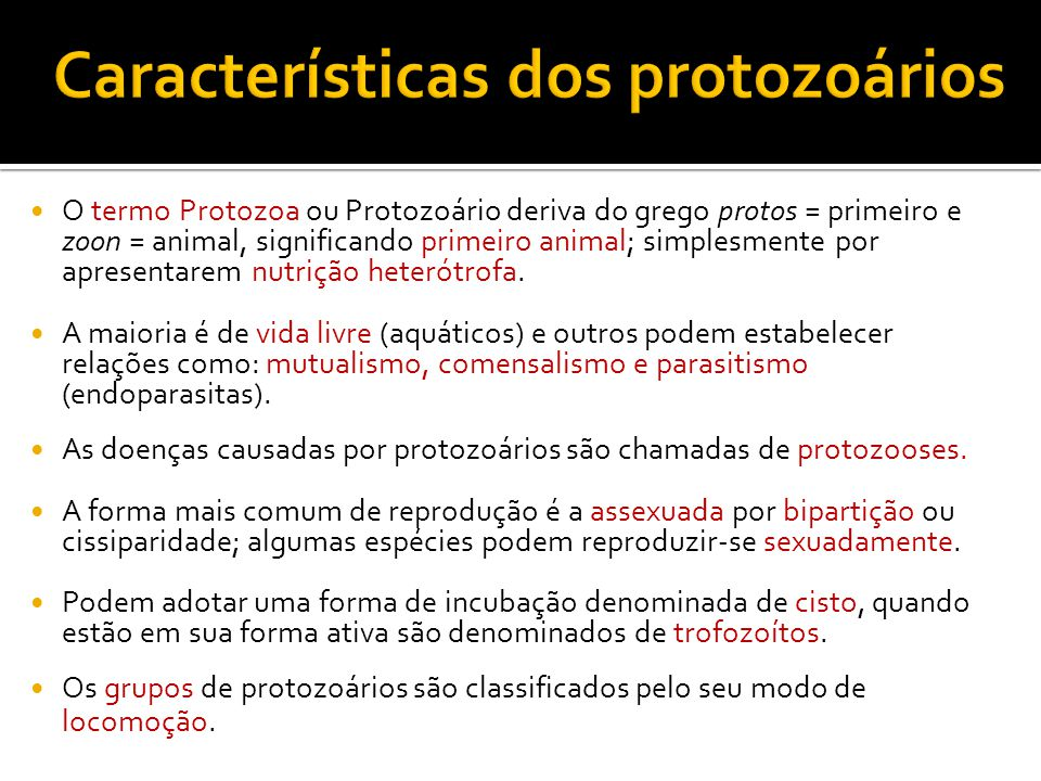 Características dos protozoários