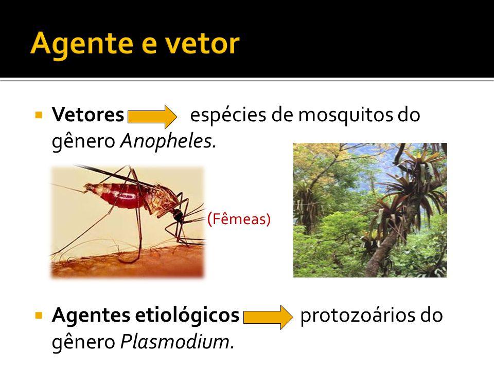 Agente e vetor Vetores espécies de mosquitos do gênero Anopheles.